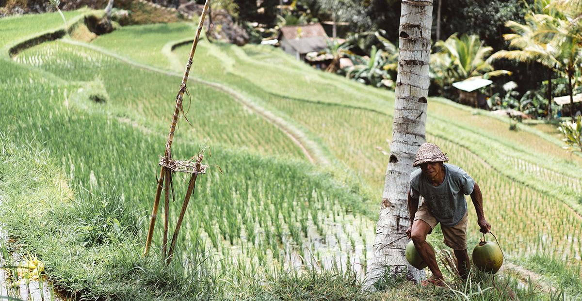 Arsenikhalten i ris ökar din risk att draabbas av cancer
